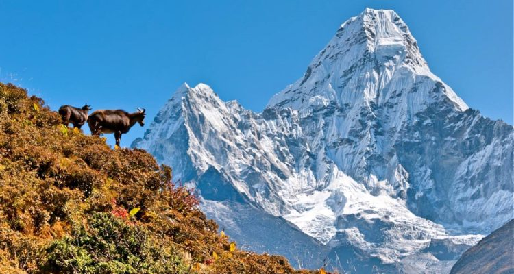 everest base camp luxury lodge trekking