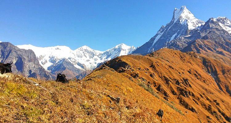 Mardi Himal