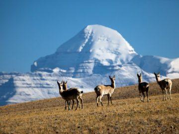 simikot-kailash-lhasa-tour63
